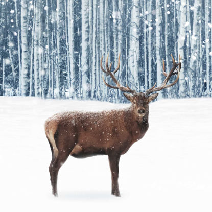 Picture of Deep Forest Stag